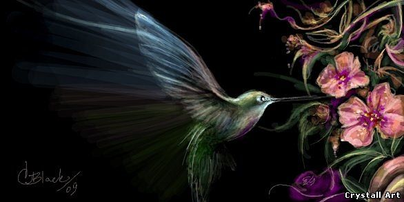Crystall_Art_grafitti-Colibri